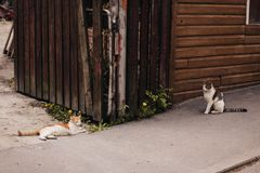 Two Orange and Brown Tabby Cats on Gray Concrete Pavement Royalty Free Stock Photos