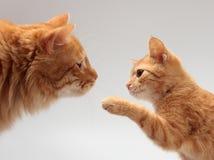 Two orange cat. Big orange cat and a little orange kitten Stock Images