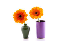 Two orange gerber in a vase Stock Photography