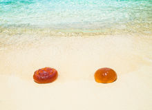 Two orange jellyfish Royalty Free Stock Photography