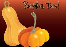 Two orange pumpkin on deep red background. Autumn harvest collection illustration. Royalty Free Illustration