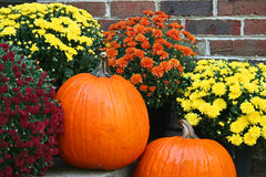 Two orange pumpkins with chrysanthemums Stock Photo