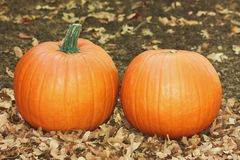 Two Orange Pumpkins in Fall Leaves. Two beautiful orange pumpkins lying on the ground surrounded by fall leaves stock photos