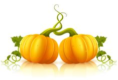 Two orange pumpkins with green leaves Royalty Free Stock Image
