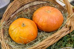 Two orange pumpkins on the hay in the basket royalty free stock image