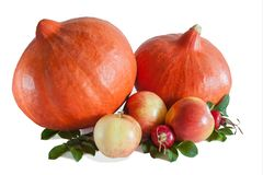 Two orange pumpkins, three apples and rosehips. With leaves on white stock images