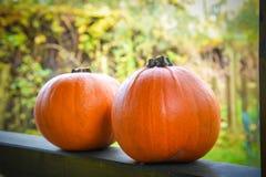 Two orange pumpkins Royalty Free Stock Images