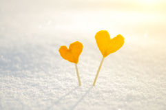 Two orange tangerine hearts on white snow background for love and St. Valentines Day concept Stock Image