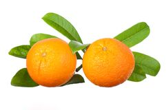 Two oranges Stock Photo