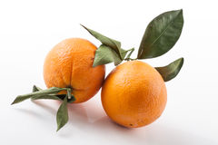 Two oranges Stock Photos