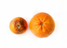 Two oranges - beautiful ripe and ugly rotten. Two oranges - fresh ripe and ugly rotten, top view on white background Stock Photography