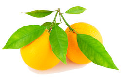 Two oranges  on a branch with leaves. Two oranges on a branch with leaves Royalty Free Stock Photos