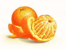 Two oranges isolated on a white surface, with one of them half peeled. Royalty Free Stock Photography