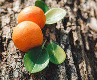 Two Oranges are on the Tree's Stump with Green Leafes,Nature Background,Spring,Toned,Selective Focus Royalty Free Stock Photography