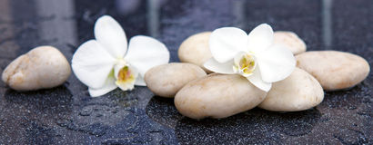 Two orchid flowers and white stones. Royalty Free Stock Image