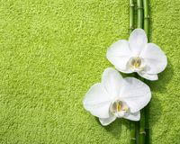 Two orchids and branches of bamboo lying on light green terry towel. Viewed from above Stock Photos