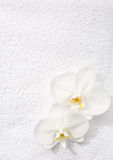 Two  orchids   lying on white terry towel. Stock Photography