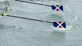 Two ores glide out of the water. As a rowing team races forward Royalty Free Stock Photography