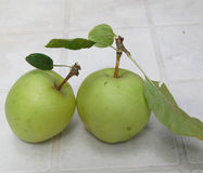 Two organic apples Stock Photography