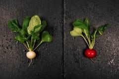 Organic delicious radishes on black background. Two organic delicious radishes on black background Stock Photography
