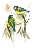 Two Oriole birds on Branch Royalty Free Stock Photography