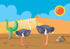 Two ostriches in the desert Stock Images