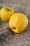 Two overripped golden apples on jute cloth Royalty Free Stock Photography