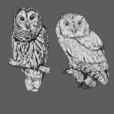 Two Owl Royalty Free Stock Photos