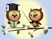 Two owls. At the branch of tree Royalty Free Stock Photo