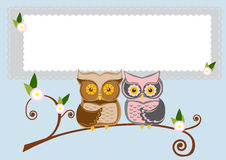 two owls on a branch Stock Photography