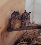 Owls. Two owls in a cage in a winter zoo Stock Photos