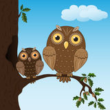 Two owls sitting on the oak branch Royalty Free Stock Image