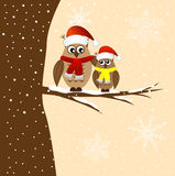 Two owls sitting on a tree branch Stock Images
