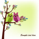 The two owls sitting on tree Royalty Free Stock Photo