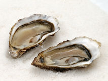 Two oysters. Exquisite shells arranged on a plate Stock Photo