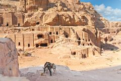 Two pack mules in Ancient Petra city Jordan Royalty Free Stock Photos