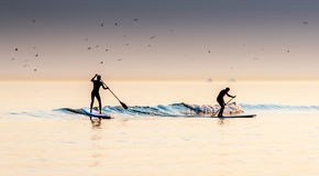 Two Paddle Boarders. Riding a wave at dusk royalty free stock photo