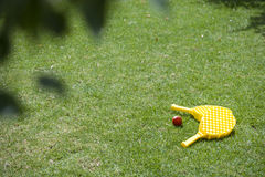 Two paddles and ball laying on green grass in backyard Stock Images