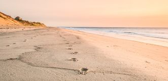 Walk this way in the sand. Two pairs of Footprints in the sand on a Cape beach in summer Royalty Free Stock Photos