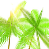 Two palm Stock Images