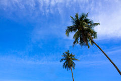 Two Palm Tree with sky and clouds Stock Photos