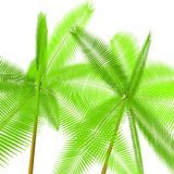 Two palm trees Royalty Free Stock Photos