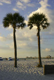 Two palm trees. In Clearwater beach, florida Stock Photography