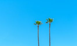 Two palm trees against a blue sky Royalty Free Stock Images