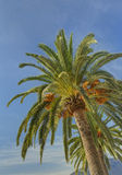 Two palm trees against blue sky Stock Photography