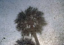 Two palm trees against shattered glass Stock Photos