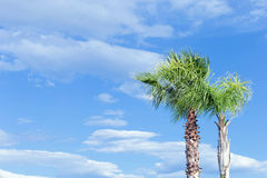 Two palm trees on a background of blue sky with white clouds royalty free stock photos