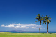 Two Palm trees on the beach Maui Stock Image