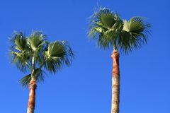 Palm trees on a bright sunny day stock images