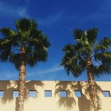 Two palm trees. California sunshine, s Royalty Free Stock Photos